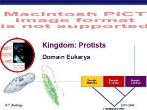 Kingdom Protists Domain Eukarya Domain Bacteria AP Biology