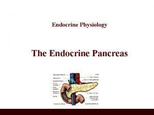 Endocrine Physiology The Endocrine Pancreas Pancreas A triangular