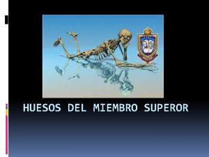 HUESOS DEL MIEMBRO SUPEROR Se dividen en 1
