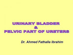 Dr Ahmed Fathalla Ibrahim Upper Surface Inferolateral surface