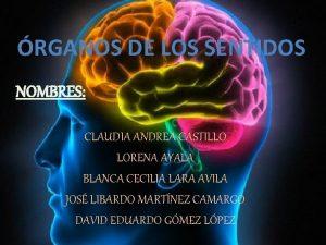 RGANOS DE LOS SENTIDOS NOMBRES CLAUDIA ANDREA CASTILLO