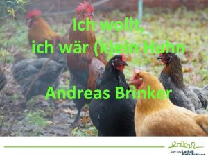 Ich wollt ich wr kein Huhn Andreas Brinker