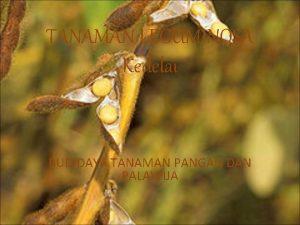 TANAMAN LEGUMINOSA Kedelai BUDIDAYA TANAMAN PANGAN DAN PALAWIJA