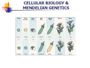 CELLULAR BIOLOGY MENDELIAN GENETICS Cellular Biology THE CELL