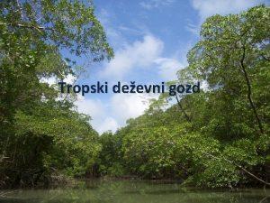 Tropski deevni gozd OBMOJE Juna Amerika Srednja Amerika