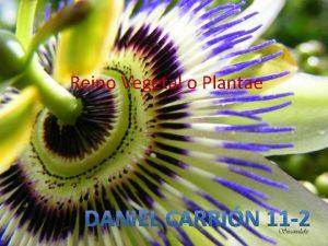 Reino Vegetal o Plantae El reino plantae incluye