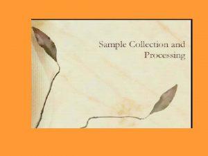 metode Manual Bergeys manual of bacteriology sni Direct