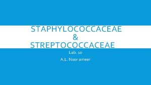 STAPHYLOCOCCACEAE STREPTOCOCCACEAE Lab 10 A L Noor ameer