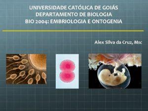 UNIVERSIDADE CATLICA DE GOIS DEPARTAMENTO DE BIOLOGIA BIO