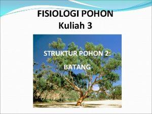 FISIOLOGI POHON Kuliah 3 STRUKTUR POHON 2 BATANG