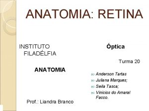ANATOMIA RETINA INSTITUTO FILADLFIA ptica Turma 20 ANATOMIA