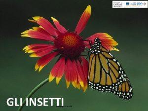 GLI INSETTI Immagine DIA INDIRE Gli insetti organismi