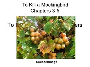 To Kill a Mockingbird Chapters 3 5 Scuppernongs