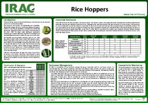 Rice Hoppers www iraconline org Insecticide Resistance Action
