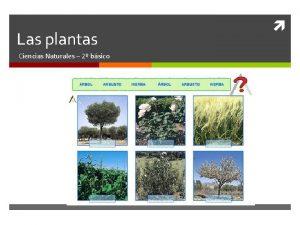 Las plantas Ciencias Naturales 2 bsico Las plantas