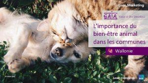 Limportance du bientre animal dans les communes Wallonie