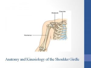Anatomy and Kinesiology of the Shoulder Girdle Lesson