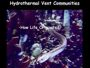 Hydrothermal Vent Communities How Life Originated Hydrothermal vent