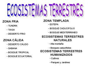 ZONA FRIA TUNDRA TAIGA DESIERTO FRIO ZONA CLIDA