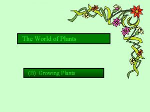 The World of Plants B Growing Plants 1