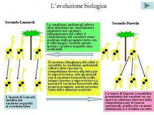 Levoluzione biologica Secondo Lamarck Le condizioni ambientali albero