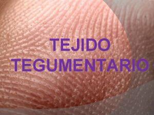 TEJIDO TEGUMENTARIO Esta integrado por piel rganos anexos