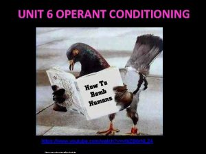 UNIT 6 OPERANT CONDITIONING https www youtube comwatch