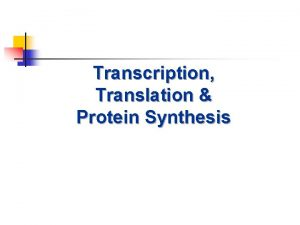 Transcription Translation Protein Synthesis Protein Synthesis n n