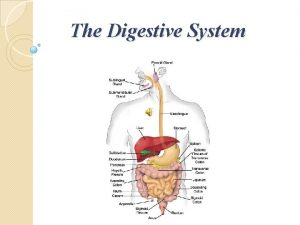The Digestive System Parts of the Digestive system