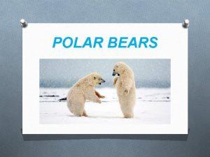 POLAR BEARS ANIMAL KINGDOM The polar belongs to
