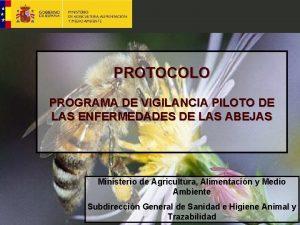 PROTOCOLO PROGRAMA DE VIGILANCIA PILOTO DE LAS ENFERMEDADES