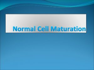 Normal Cell Maturation Blood cells maturation Blood cells