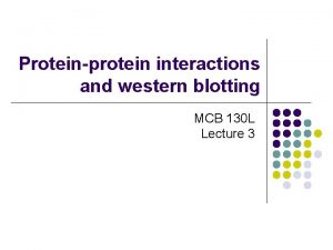 Proteinprotein interactions and western blotting MCB 130 L