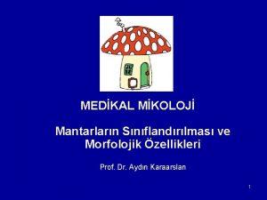 MEDKAL MKOLOJ Mantarlarn Snflandrlmas ve Morfolojik zellikleri Prof