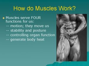 How do Muscles Work u Muscles serve FOUR