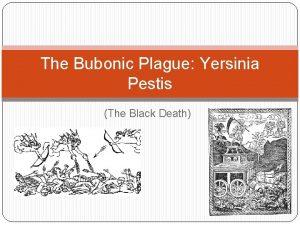 The Bubonic Plague Yersinia Pestis The Black Death