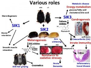 Various roles Metabolic disease Energy metabolism glucosefatty acid