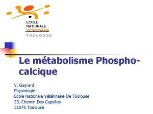 ECOLE NATIONALE VETERINAIRE TOULOUSE Le mtabolisme Phosphocalcique V
