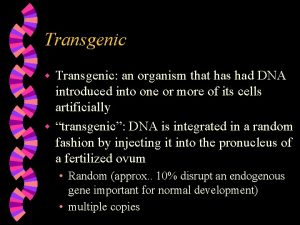 Transgenic an organism that has had DNA introduced