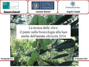 Ruggero Petacchi Antonio Belcari Angelo Canale La mosca