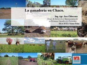 La ganadera en Chaco Ing Agr Jose Chiossone