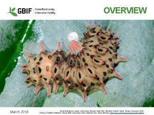 OVERVIEW March 2019 Histia flabellicornis subsp ultima larva