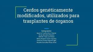 Cerdos genticamente modificados utilizados para trasplantes de rganos