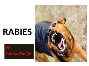 RABIES By Fatma Khalifa Synonyms Lyssa Hydrophobia Rabies