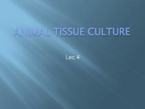 ANIMAL TISSUE CULTURE Lec 4 Animal tissue culture