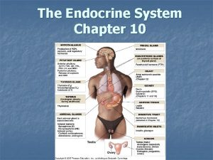 The Endocrine System Chapter 10 Endocrine System Control