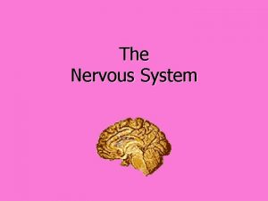 The Nervous System The Nervous System Functions of