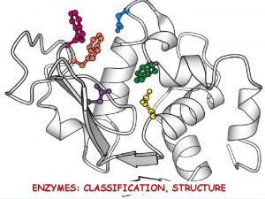 ENZYMES CLASSIFICATION STRUCTURE Enzymes catalysts of biological reactions