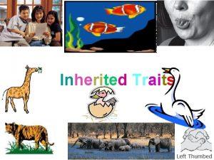 Inherited Traits What are some inherited traits Inherited