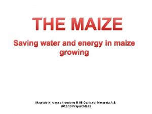 THE MAIZE Saving water and energy in maize